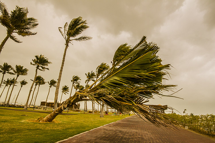 Palmtree blown over in the storm Palmtree blown over in the storm Palmtree blown over in the storm Palmtree blown over in the storm.